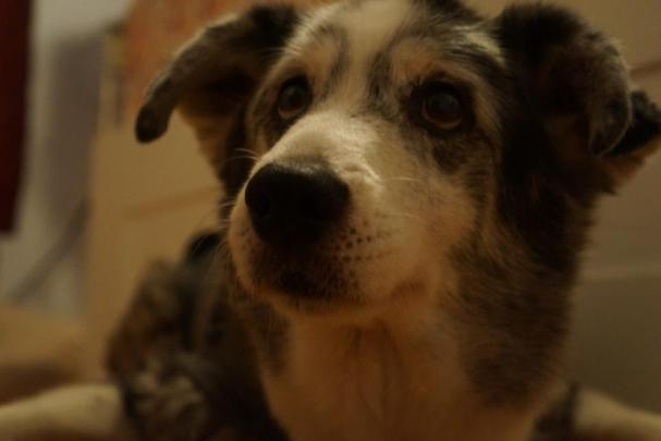 When Treating Your Dog Can Harm, Part 2