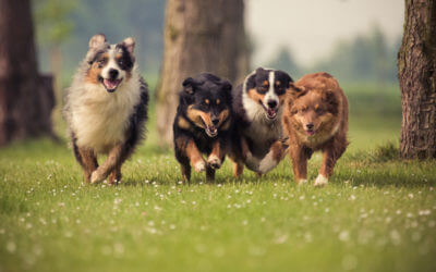 How to Socialize an Adult Dog with Other Dogs Part II
