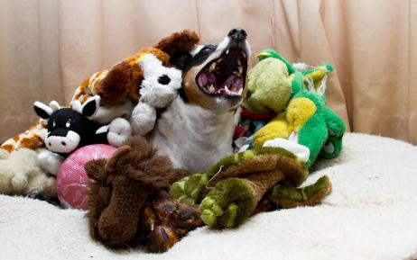 When Treating Your Dog Can Harm, Part 1