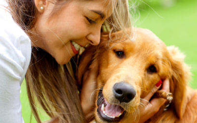 Five Positive Changes at Home that Can Improve Your Dog's Behavior