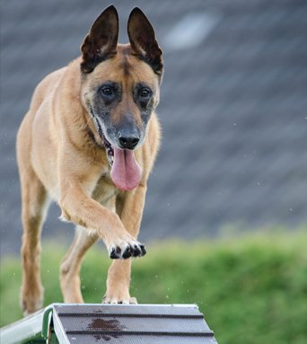 Canina Dog Training - Private Lessons